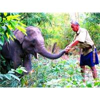 Nài voi, nghề độc nguy cơ thất truyền