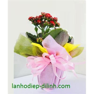 SĐ 007 : Hoa sống đời kép mini