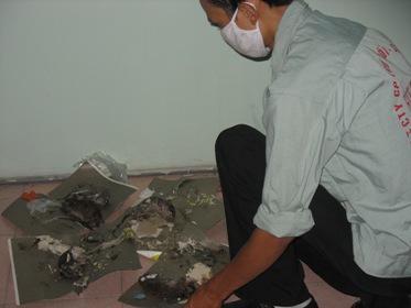 Phương pháp diệt chuột