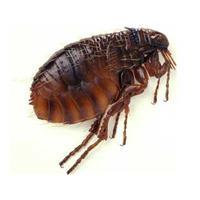Những côn trùng gây bệnh ở Việt Nam