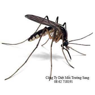Tác hại của muỗi